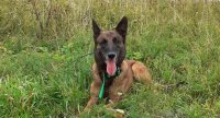 Prověrka pohotovostní jednotky záchranných psů